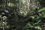 przedzieramy się przez dżunglę