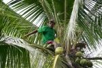 Michael zrzuca dla nas kokosy z palmy