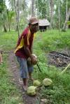 George obiera kokosy