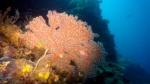 na ścianie nie brakuje koralowców