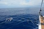 delfiny u burty Katharsis II