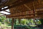pomiędzy bambusami wyeksponowany najdłuższy yam