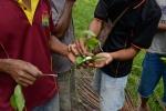 rzucie orzechów betelu z wapnem i liśćmi pieprzu betelowego