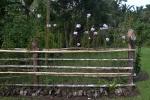 orchideowe ogrodzenie