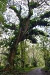 czarodziejskie drzewo