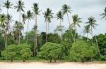 palmy i drzewa ZS