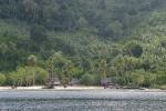 za wioską plantacja palm