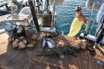 dostawa świeżych homarów, ryb i owoców PK