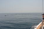 Zbyszek fotografuje delfiny