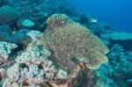 2 koralowe ogrody przy Cape Kri