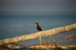 jeden z licznych skrzydlatych mieszkańców atolu