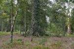 plantacja niczym las liściasty