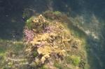 podwodne życie w Jellyfish Lake