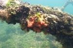 nie tylko meduzy żyją w Jellyfish Lake