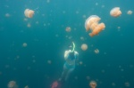 Weronka wśród niezwykłych meduz