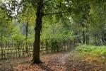 pień 300-letniego drzewa gałki muszkatołowej