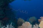 korale w tunelu Siaes