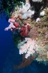 kolekcja miękkich korali w Siaes Tunnel