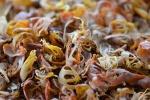 suszona osnówka - %22kwiat%22 gałki muszkatołowej - macis