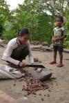 łupanie nasion kanarecznika - orzechów pili