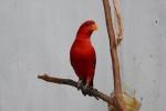 papuga przed jednym ze straganów
