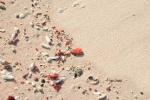 dzięki czerwonemu koralowi mamy różowe plaże na Komodo