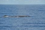 zagubiony wieloryb na naszej trasie