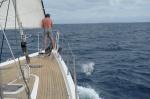 Zbyszek z delfinami w drodze na południe