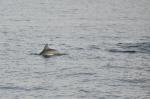 popołudniowa wizyta delfina