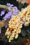koralowe ozdoby 1