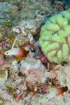 te rybki żyją w parach