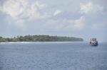na południu Ari można wypatrzeć rekiny wielorybie