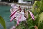 kwiaty PK