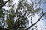 ptaki w gniazdach ZS
