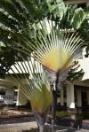 palmy jako drzewka ozdobne na ulicach