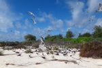 kolonia schodzi aż do plaży