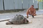 Zbyszek i żółw AM