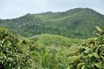 widok z punktu widokowego w Vallee de Mai