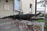 krokodyl strzegący Muzeum Historii Naturalnej w Victorii