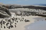 pingwinowisko / plażowisko